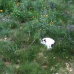 Blackpants AKA Mr. Bunny
