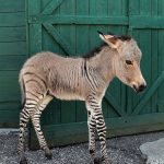 Apropos of Zonkeys